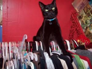 black cat in closet