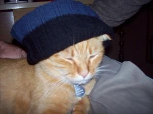 orange cat with knit cap