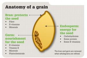 picture of whole grain parts